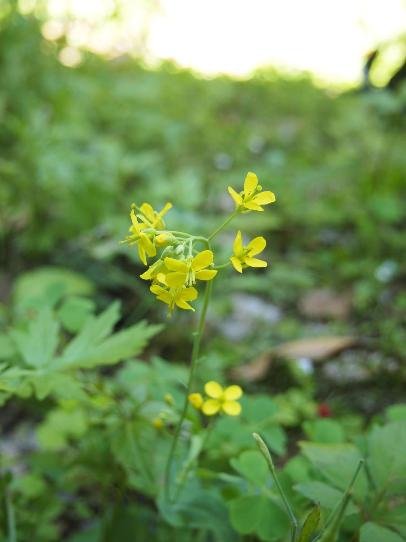 在公园的角落开放的小的花、花那个V
