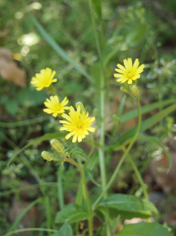在公园的角落开放的小的花、花那个VI