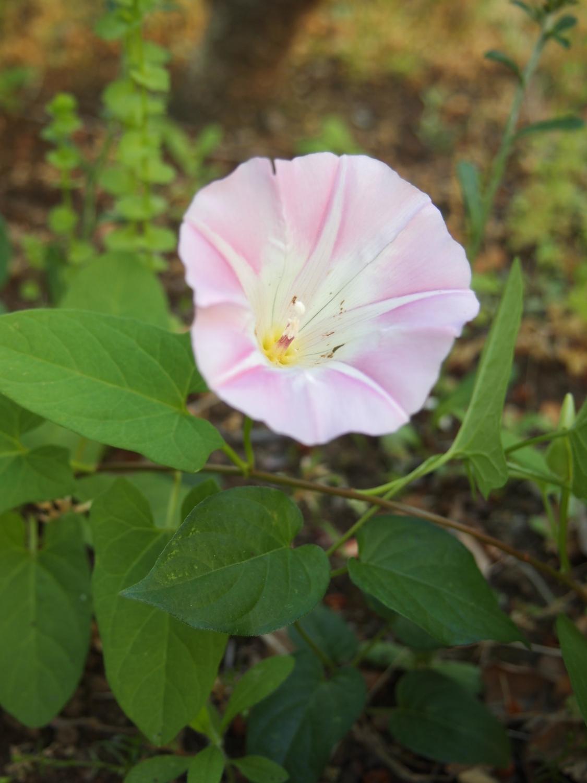 在公园的角落开放的小的花、花那个VII