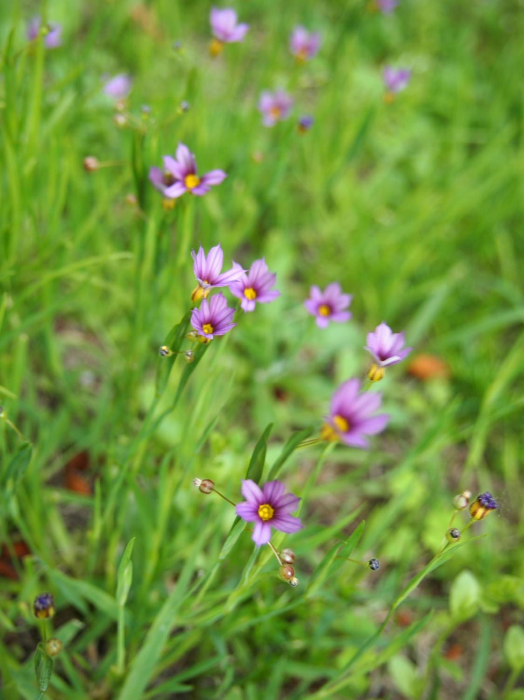 在公园的角落开放的小的花、花那个VIII