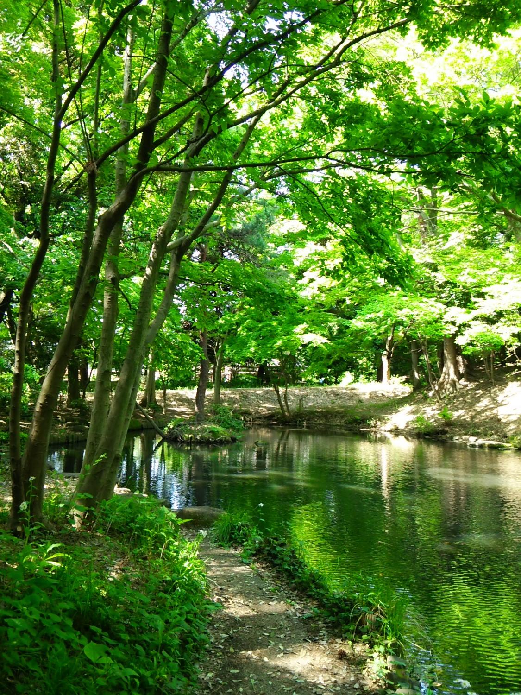 作为初夏的石神井公园