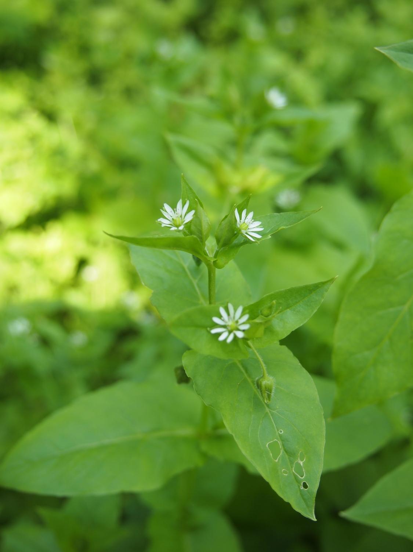 공원의 편 먹에 피는 작은 꽃·꽃 그 IX