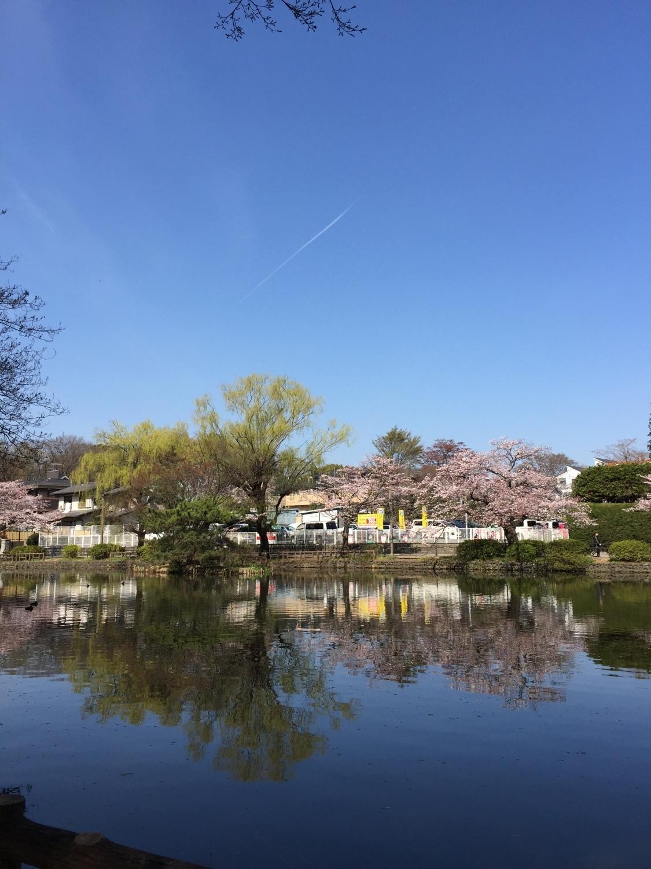 对樱花航迹云