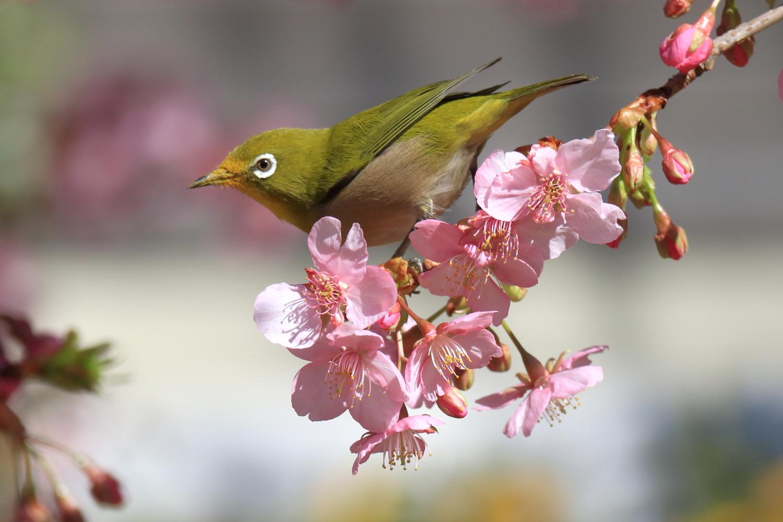 春天到的圖片