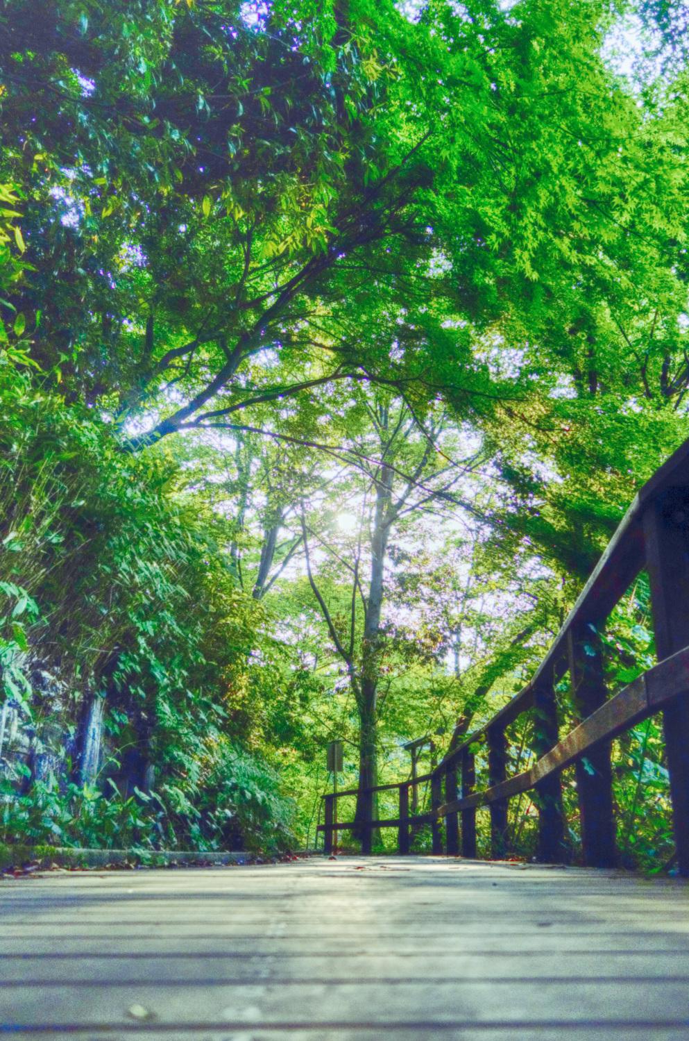 초여름의 향기, 샤쿠지이코엔 이미지