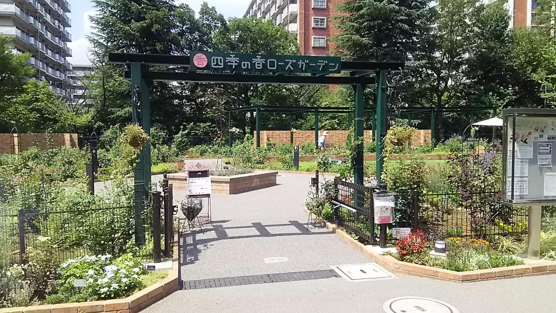 新设的玫瑰园♪
