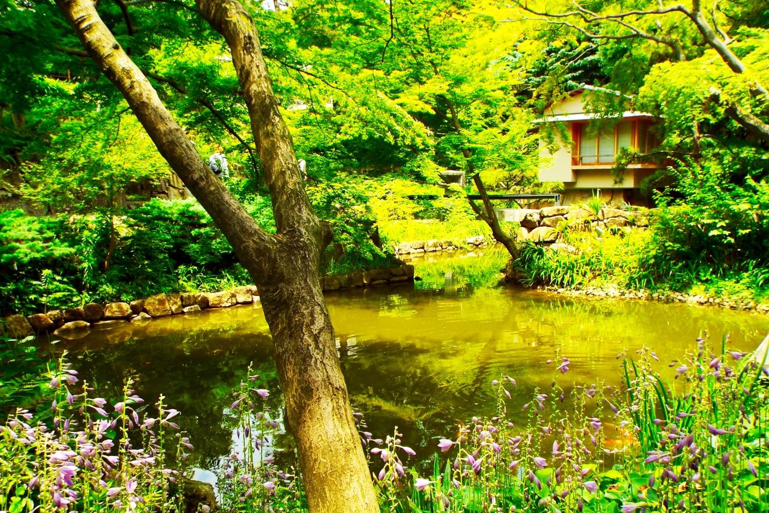 安靜的庭園圖片