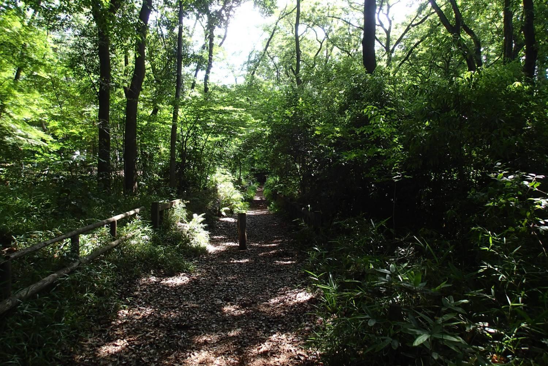 3宝贝寺池塘周边的散步道