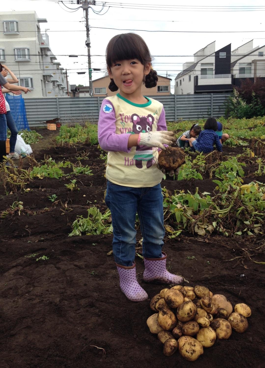 We dig potato
