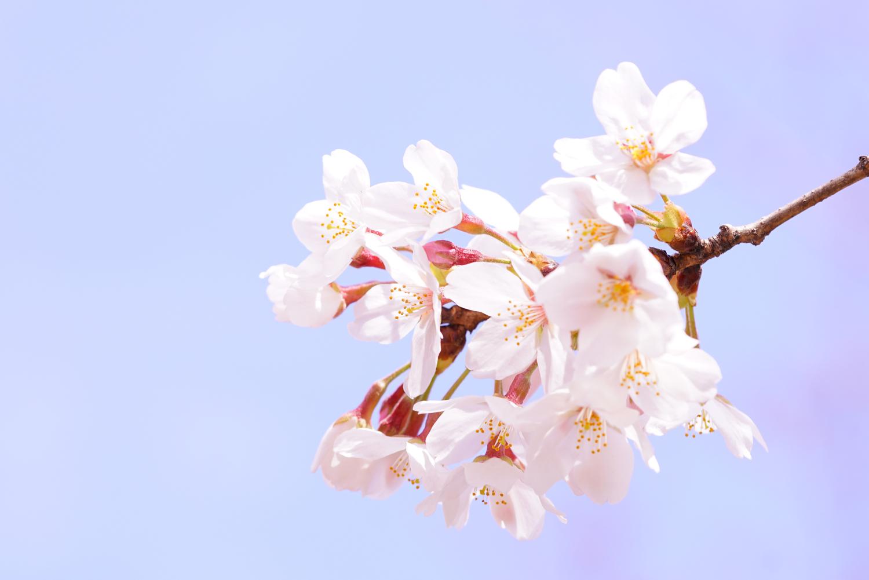 봄의 쾌활하게 마음 뛰는 이미지