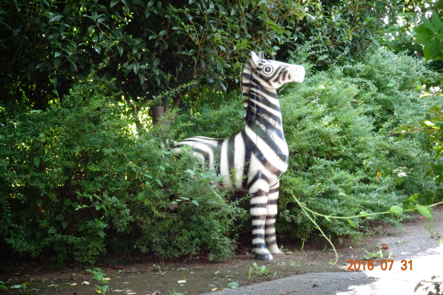 It is zebra of Nakazato green tract of land.