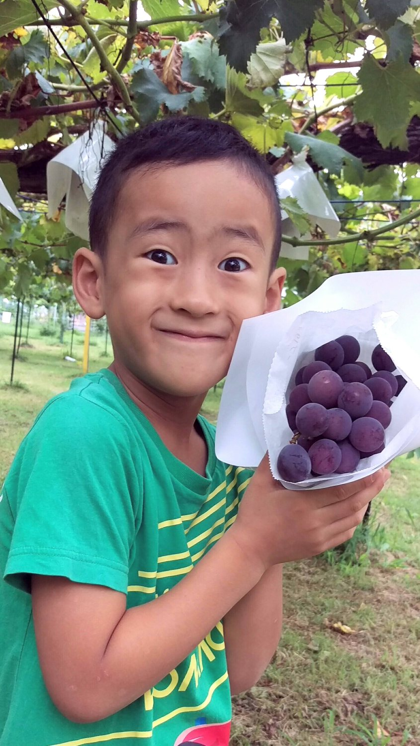Image which loves grape