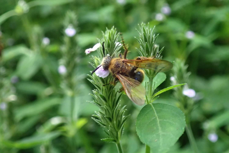 적은 꽃에 모여 큐미트하는 벌