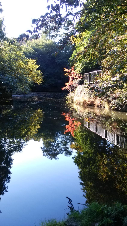 무사시세키 공원의 가을