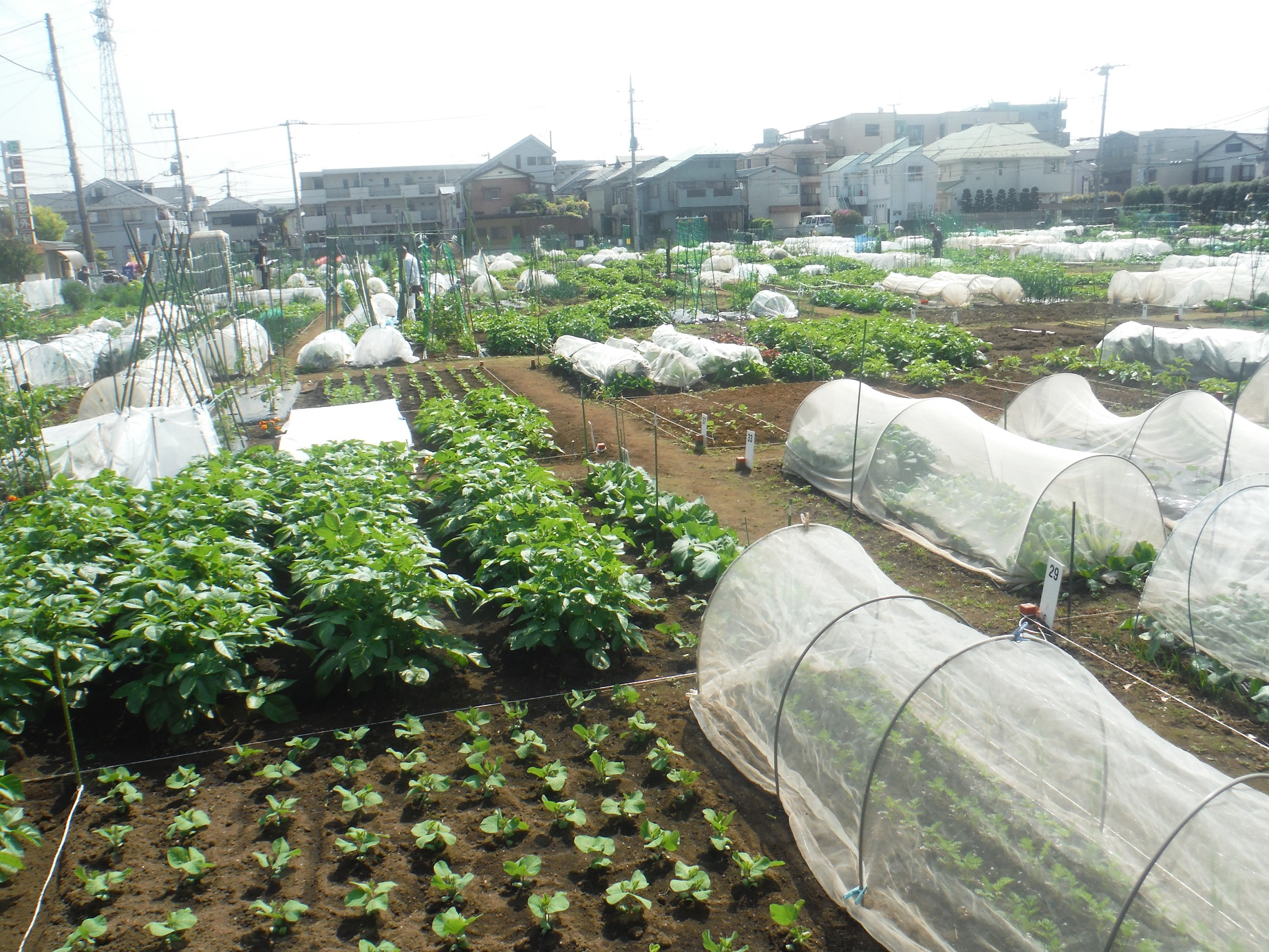 ★World city agriculture summit special course ★Did the world shake in charm of city agriculture of Nerima?