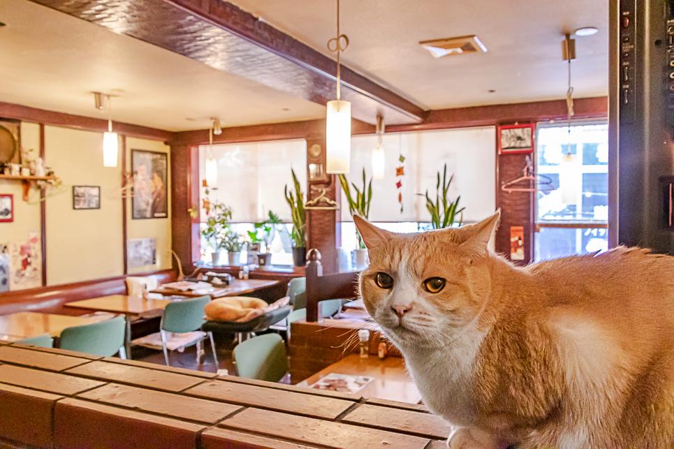 练马的猫圣地