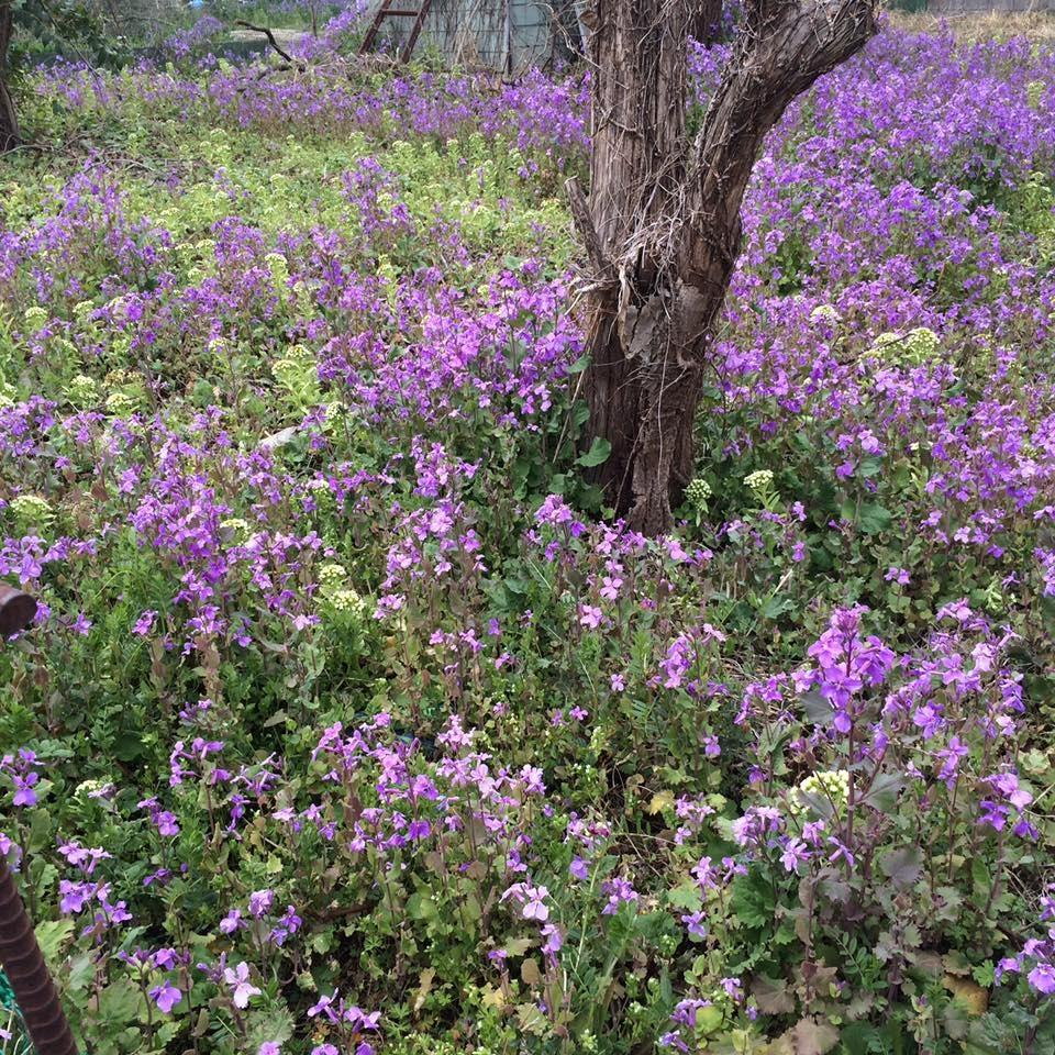Wild flowers of vacant land are in full blossom, too