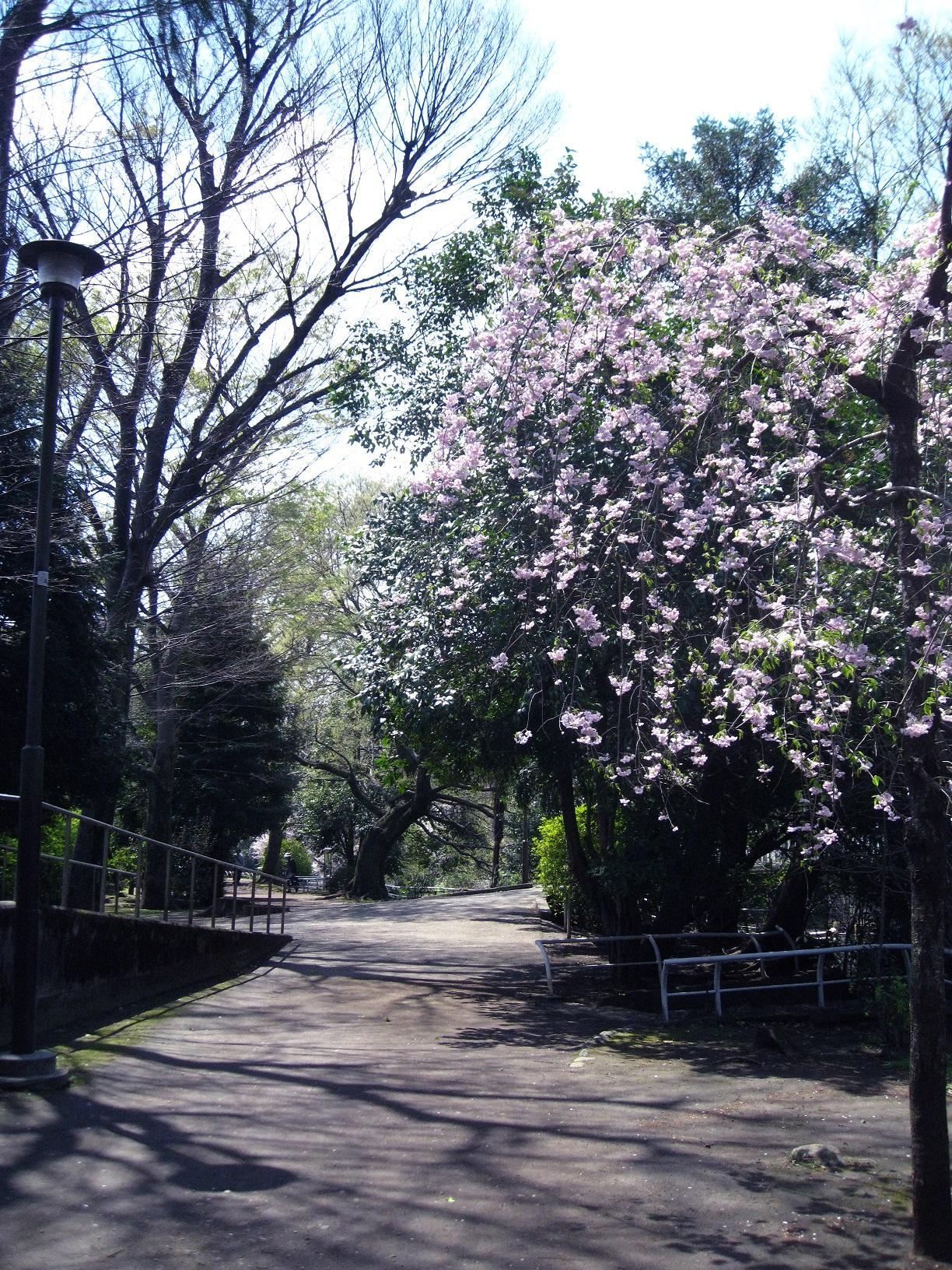 봄의 관 공원을 산책~♪