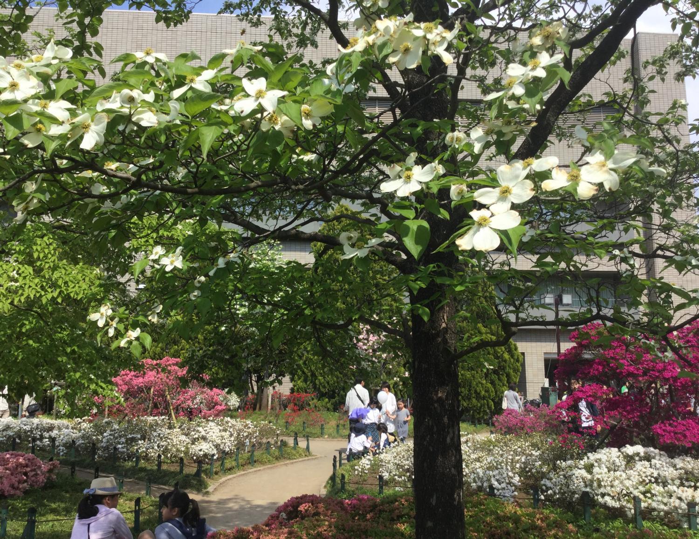 白色的花mizukitotsutsuji