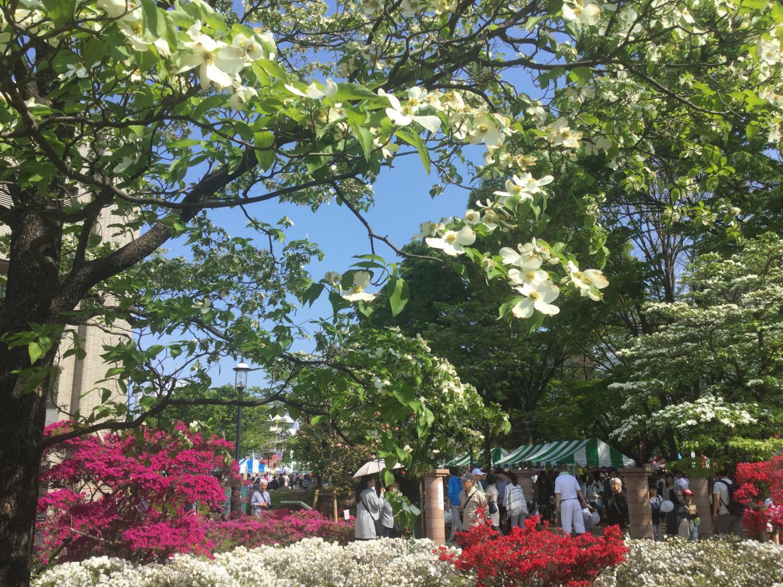 흰 꽃 미즈키와 진달래 화상