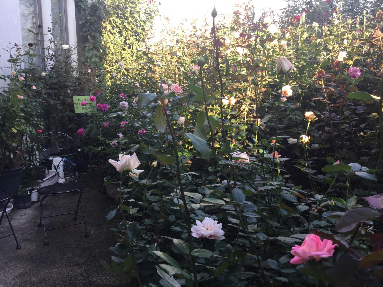 玫瑰花的飨宴 ①