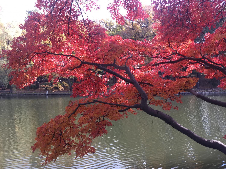愛好石神井公園大學圖片