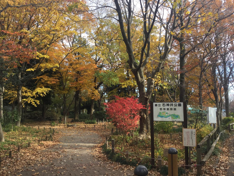 野草观察园的枫叶图片