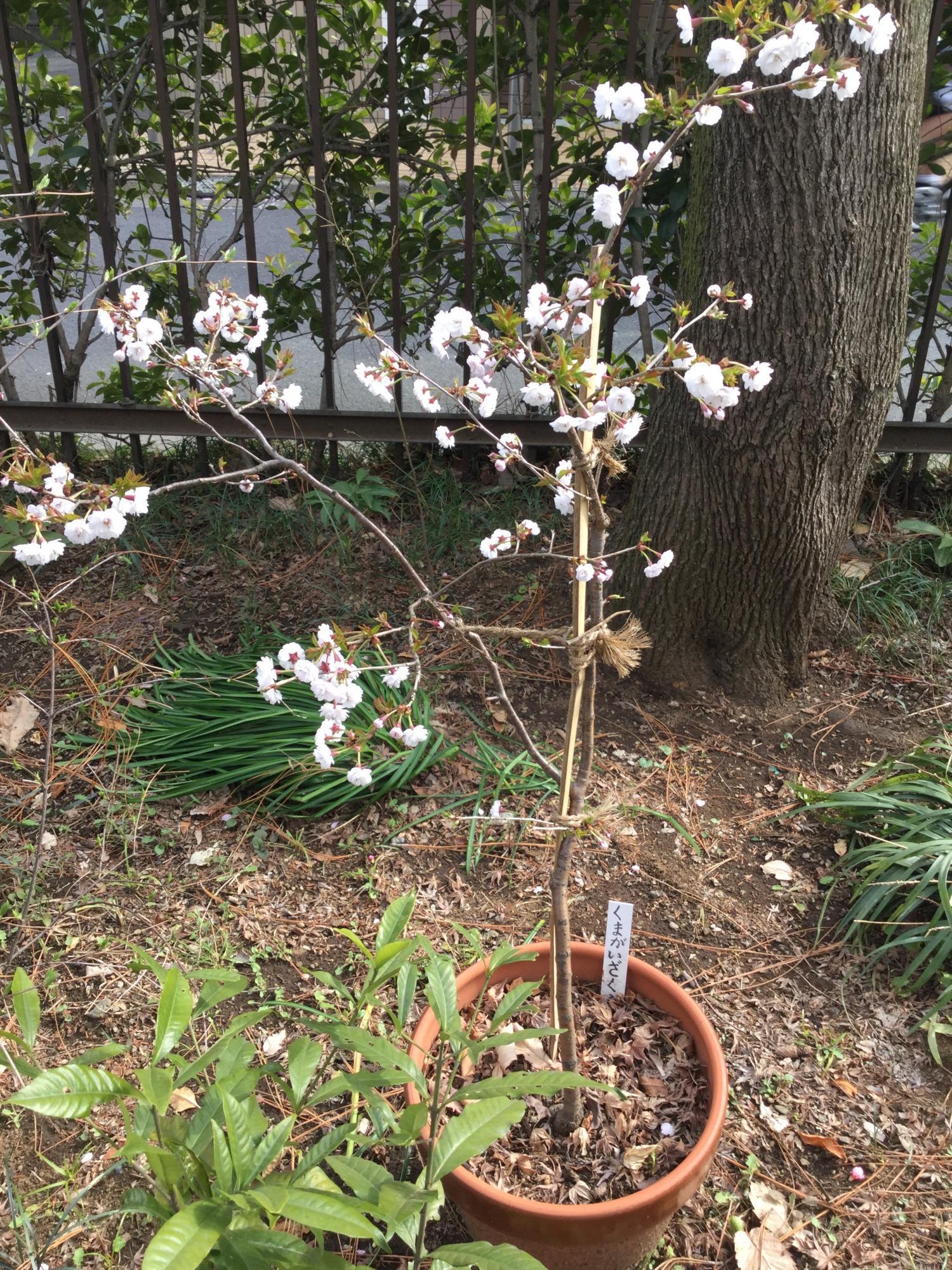 마키노 기념정원의 꽃들 이미지