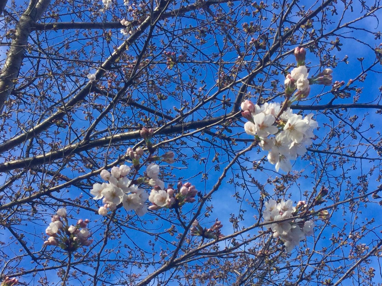 Blossom declaration