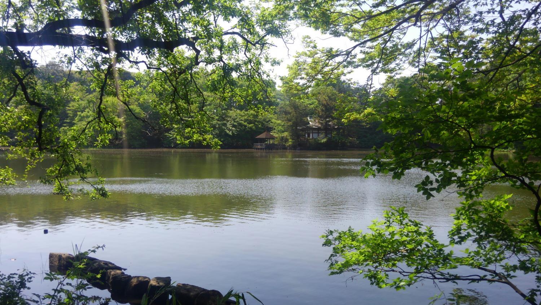 Shakujii Park image of the fresh green