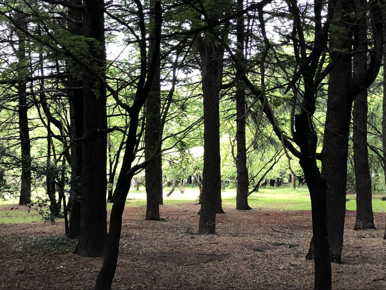 신록의 히카리가오카 공원 이미지