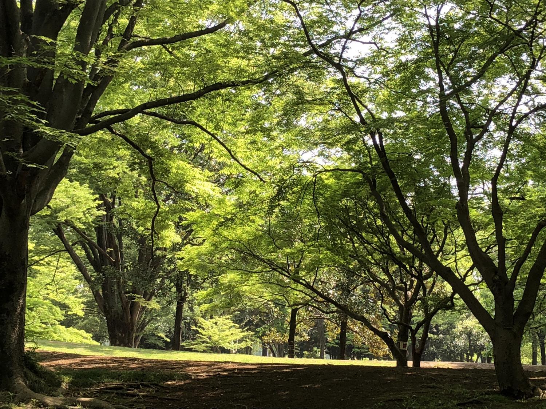 Sunshine filtering through foliage image of the fresh green
