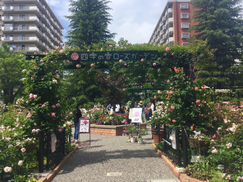 玫瑰花的香味的院子