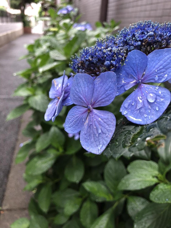 Setting-in of the rainy season