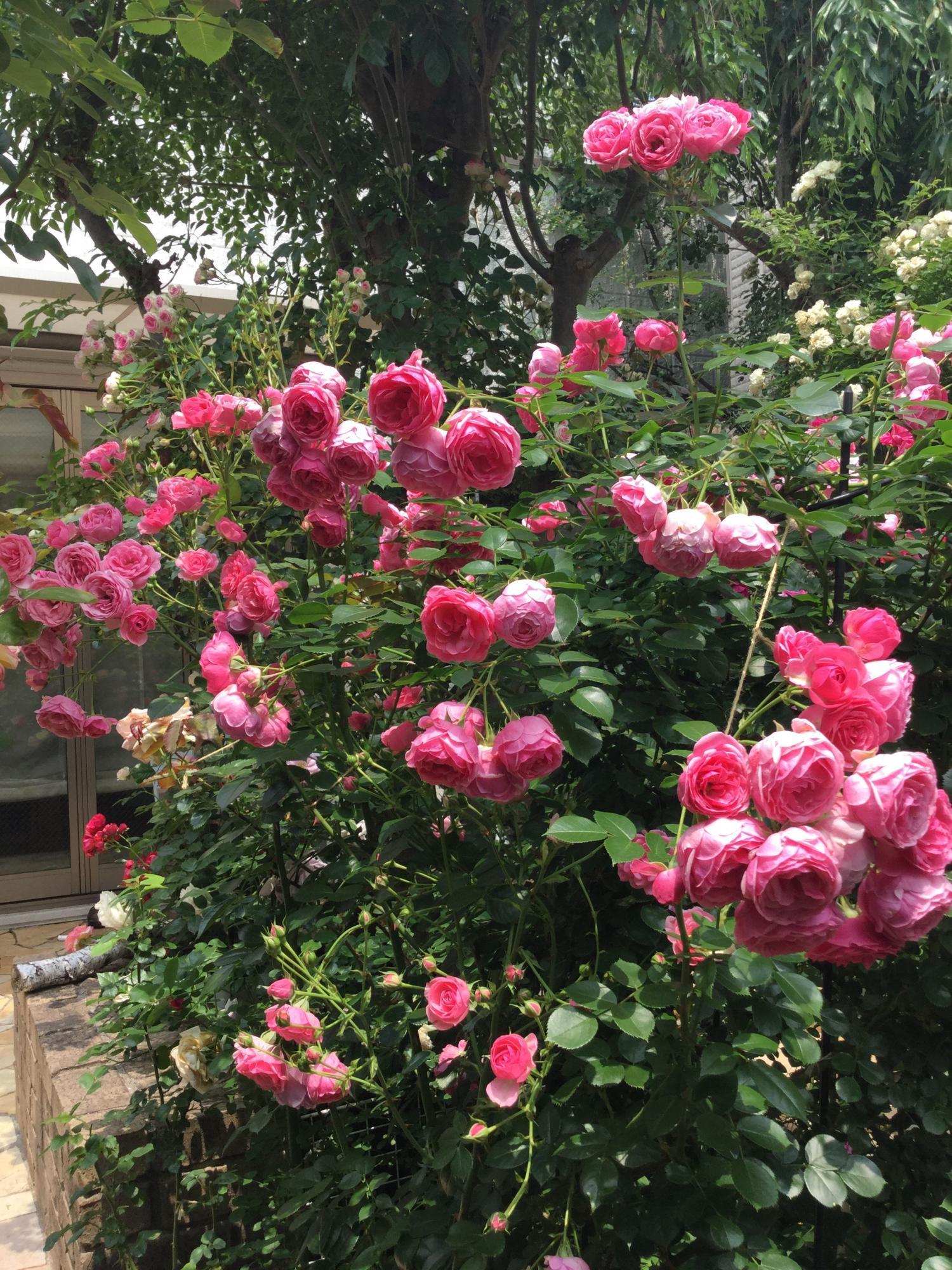 opungaden好的院子图片