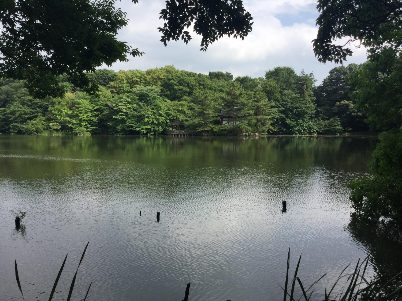 恬静的有一天的3宝贝寺池塘图片