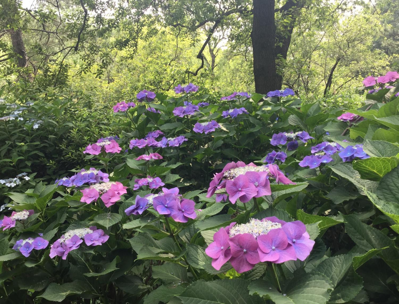 3宝贝寺池塘的紫阳花颜色颜色图片