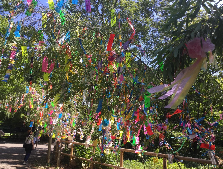 3宝贝寺池塘的七夕装饰