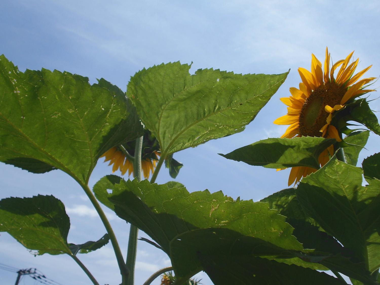 여름 하늘과 사이가 좋아