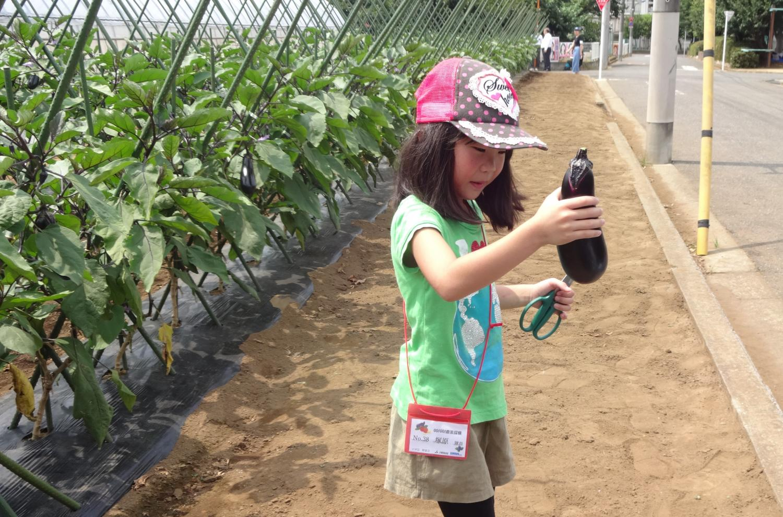 GO!GO! 농업 탐험대!!야채 수확편 이미지
