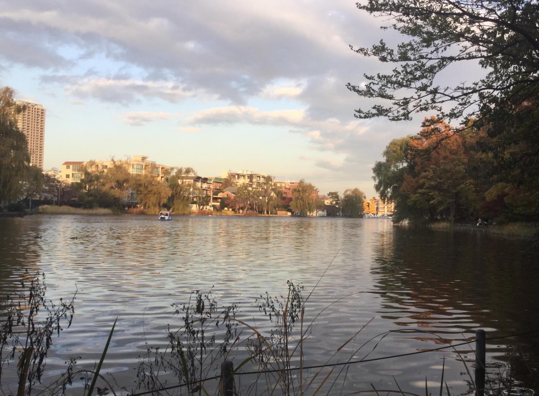 喜欢的小船池塘图片