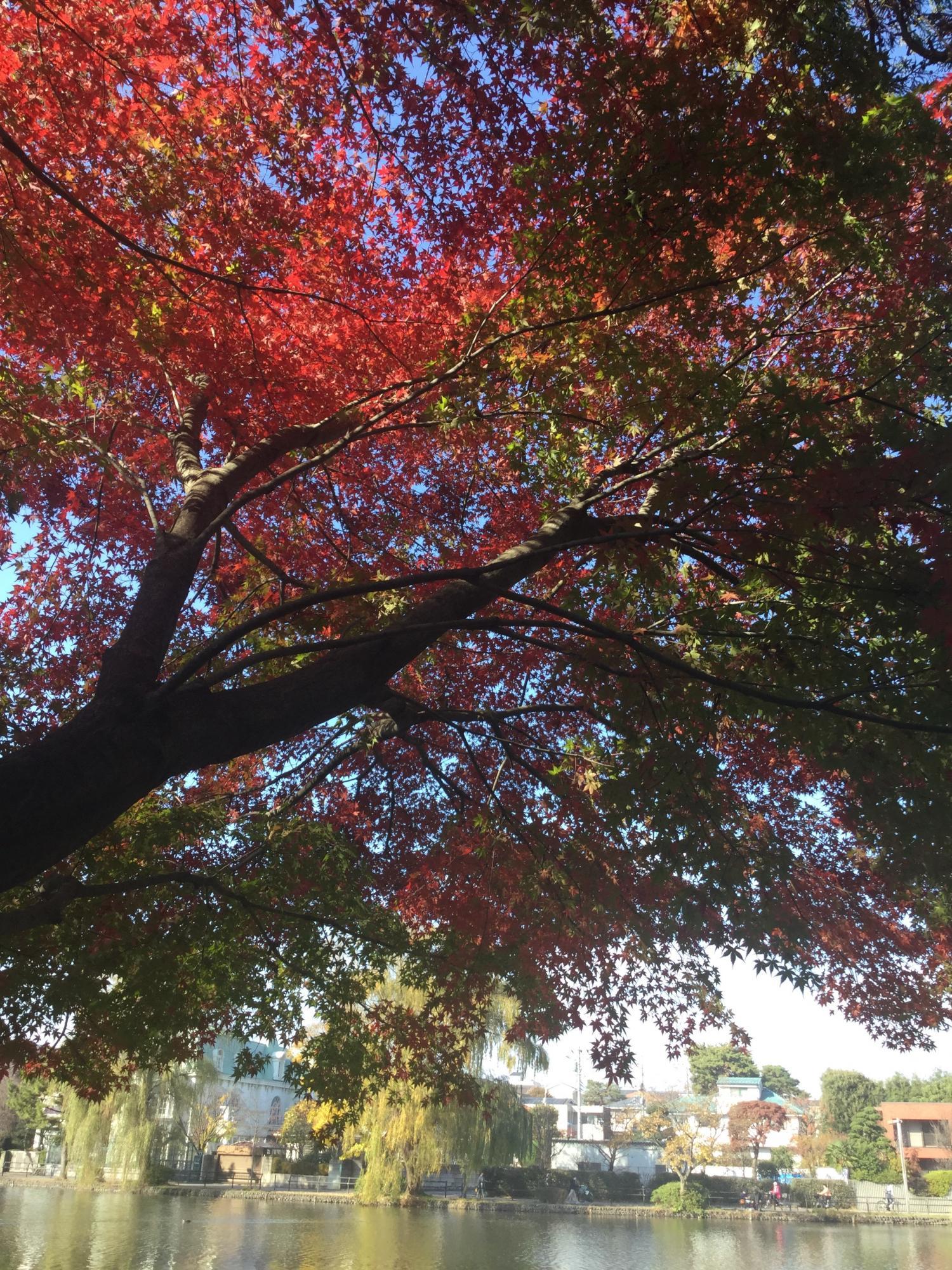 보트 연못의 단풍 이미지