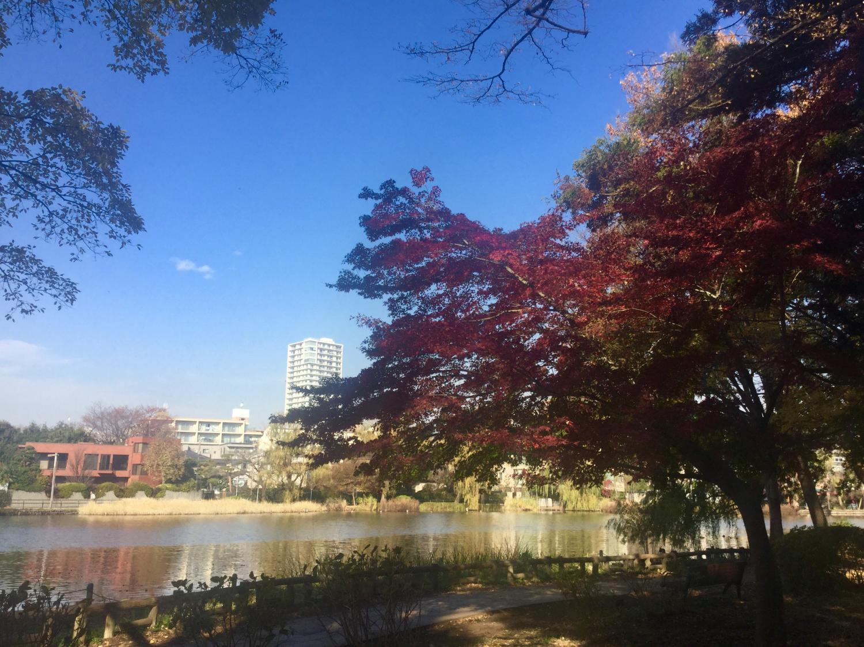 小船池塘的枫叶图片