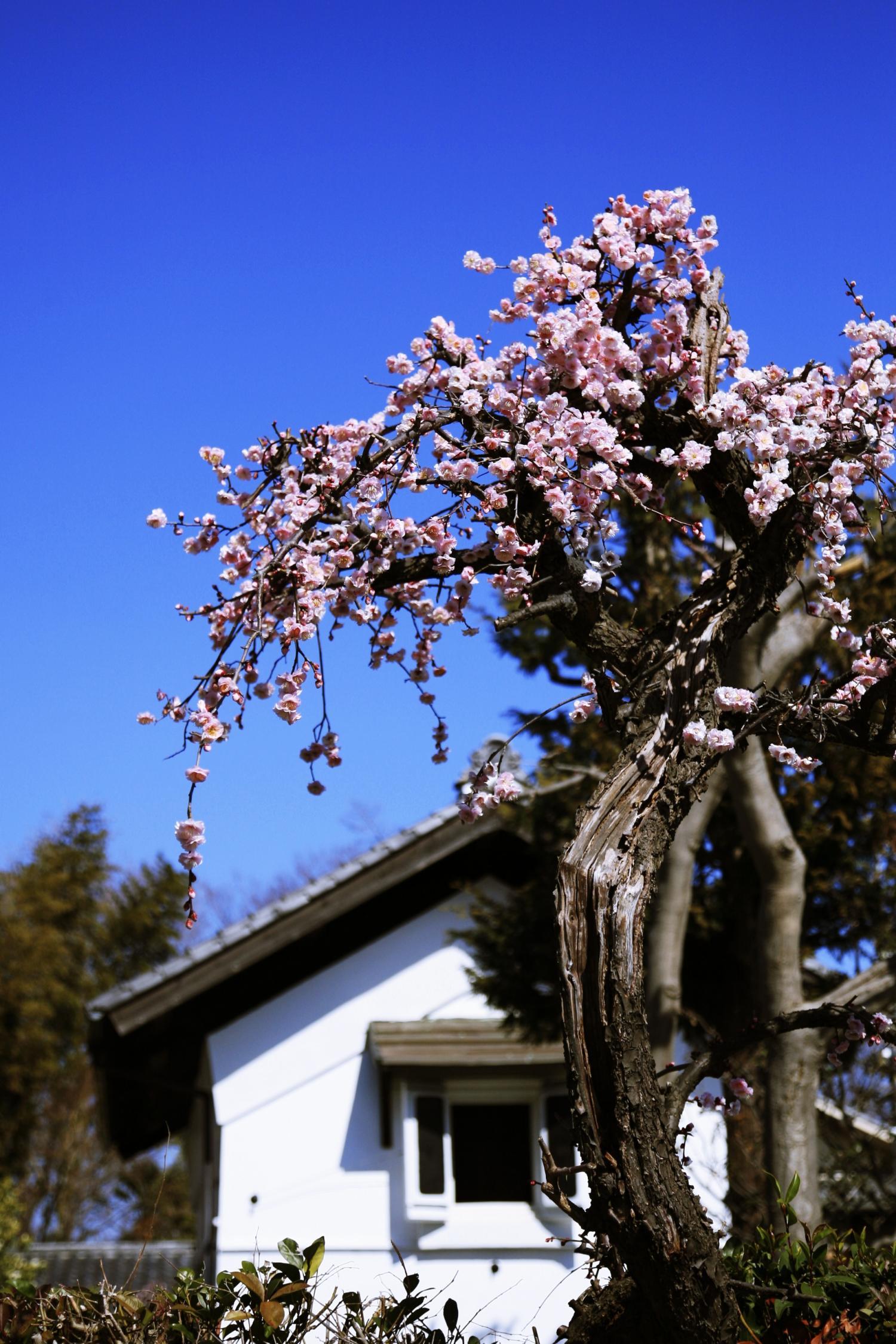 早春的點景
