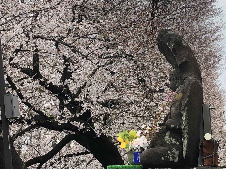 不動明王和櫻花圖片