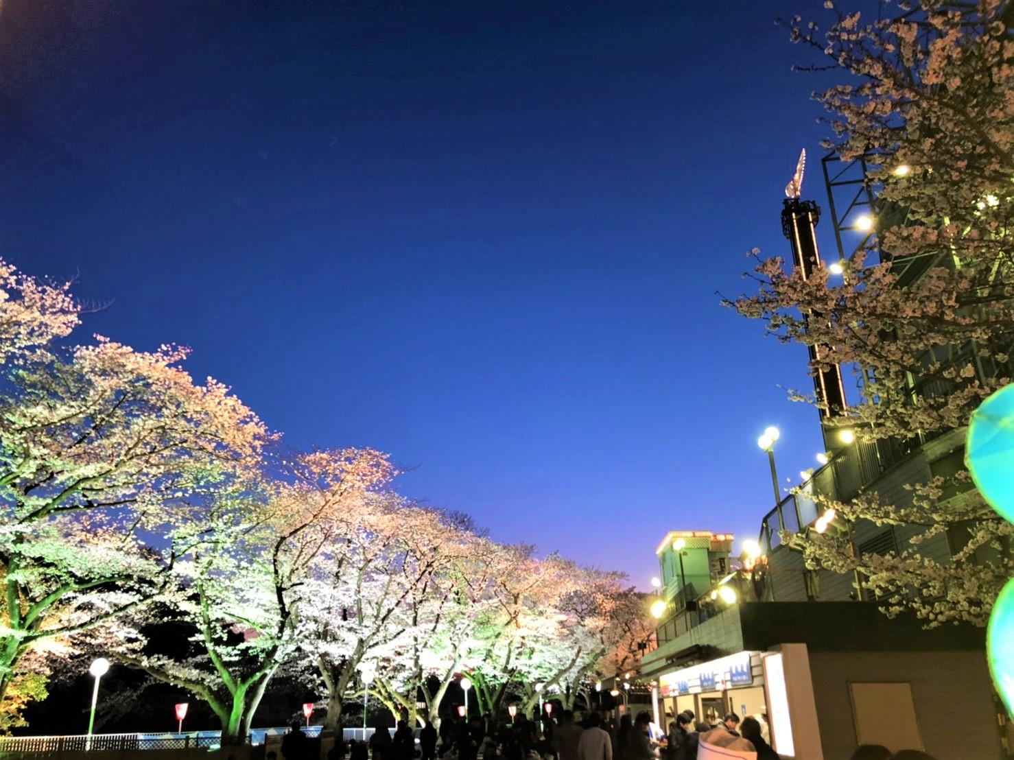 toshimaenno櫻花圖片