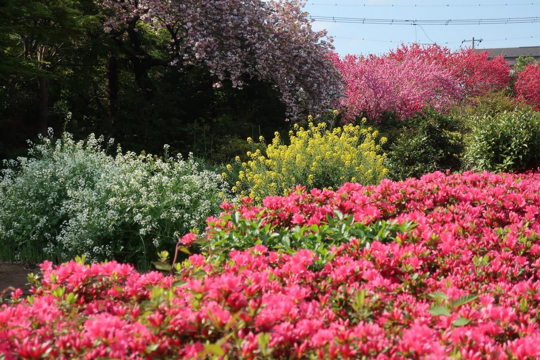 백화 요란의 봄 이미지
