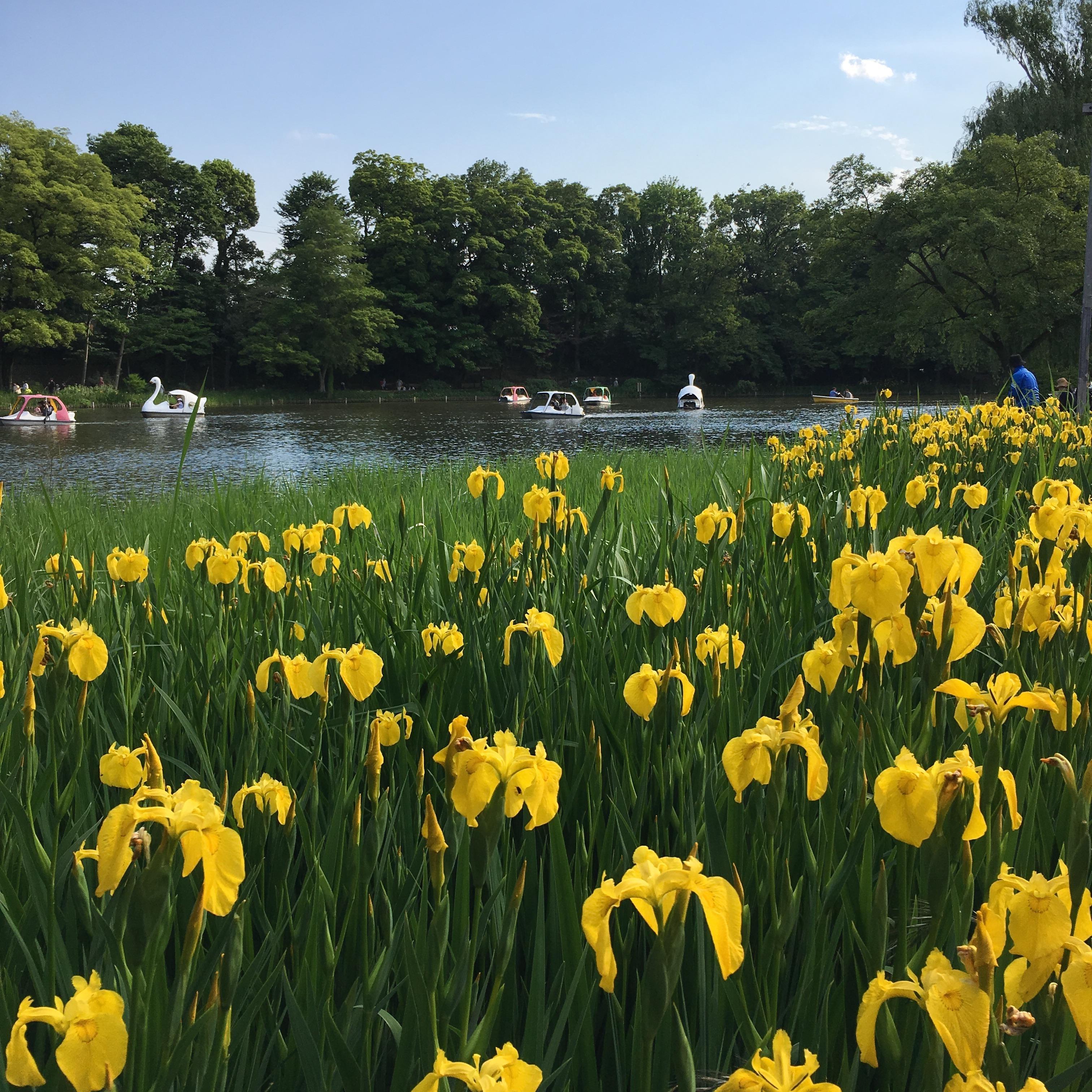 石神井池塘图片