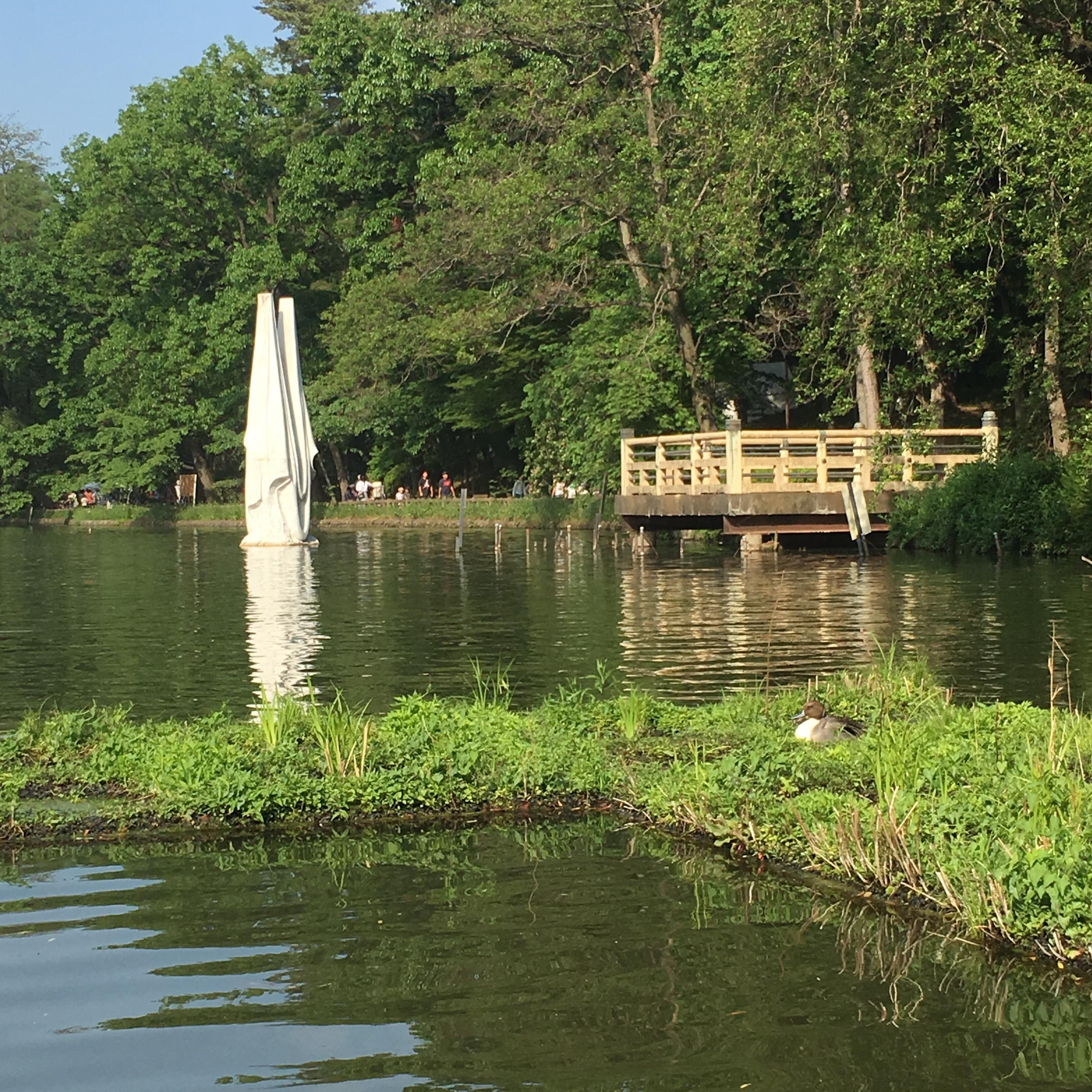 石神井池塘圖片