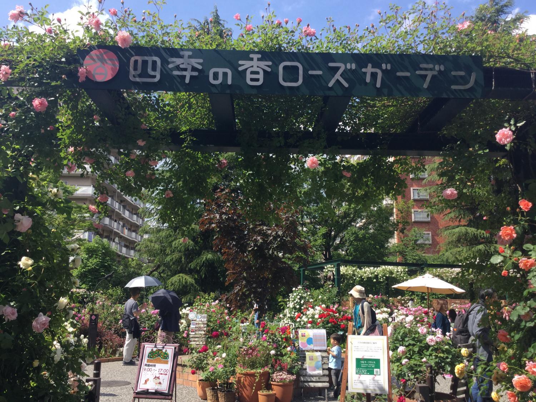 很喜欢的四季的香玫瑰园图片